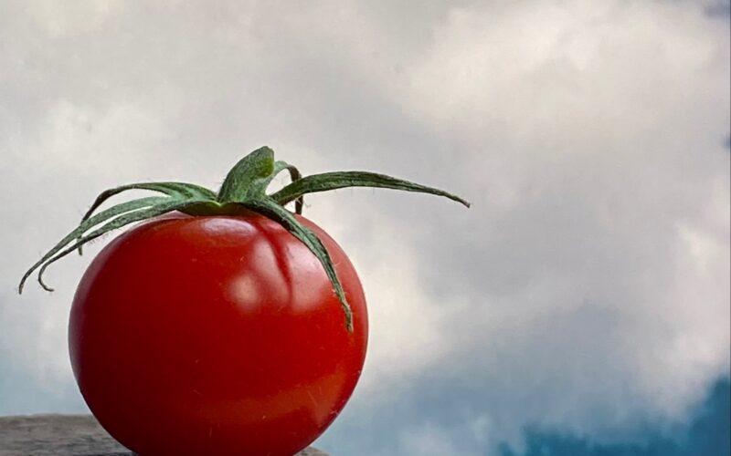 Tomato_Pomodoro